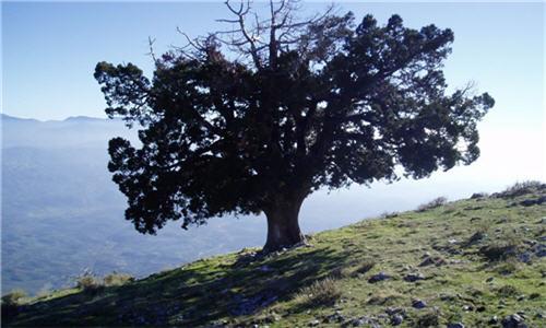 ΚΑΣΤΡΙ-ΛΑΚΩΝΙΑΣ-ΑΓΙΟΣ-ΙΩΑΝΝΗΣ2